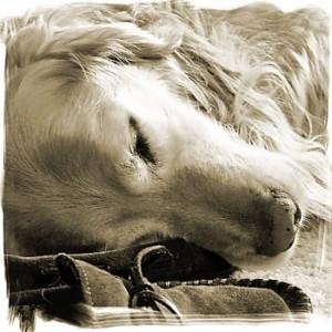 a real shaggy dog story