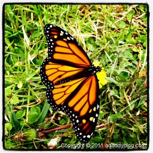 Sample Instagram Photo - December Texas Butterfly